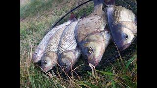 Рыбалка на реке Неман с Ночёвкой Где поймать крупного леща на реке Уха на природе Рыбалка с Ночёвкой