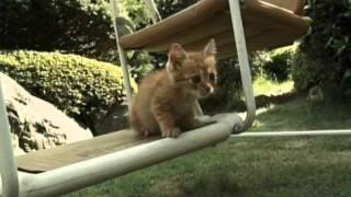 猫がいる家は、すこし幸せ。 2010年10月より好評放送中!伊武雅刀主演の...