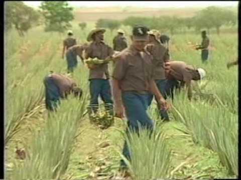 ALOE VERA FARM & MANUFACTURING FACILITY