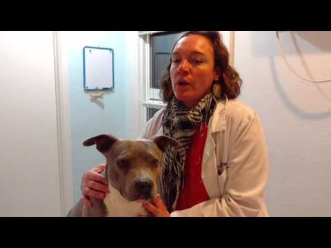 Holistic Veterinary Chinese Herbal Treatments with Dr Delia MacDonald DVM