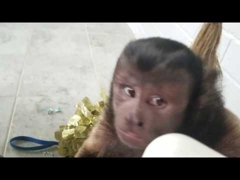 Monkey Sticker Fun