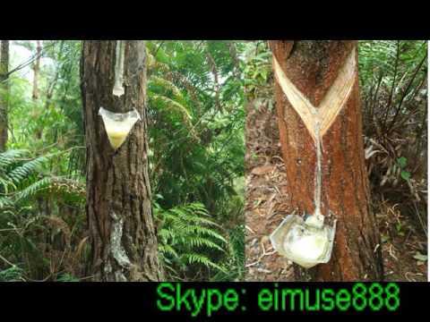 Pine Gum Rosin/Rosin Resin-Industrial Gum Rosin (Grade 'WW', 'WG', 'N')