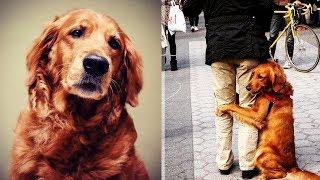 Эта собака обнимает каждого встречного