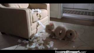 Free Credit Report.com Hilarious Commercial - Good 745 (high Quality)