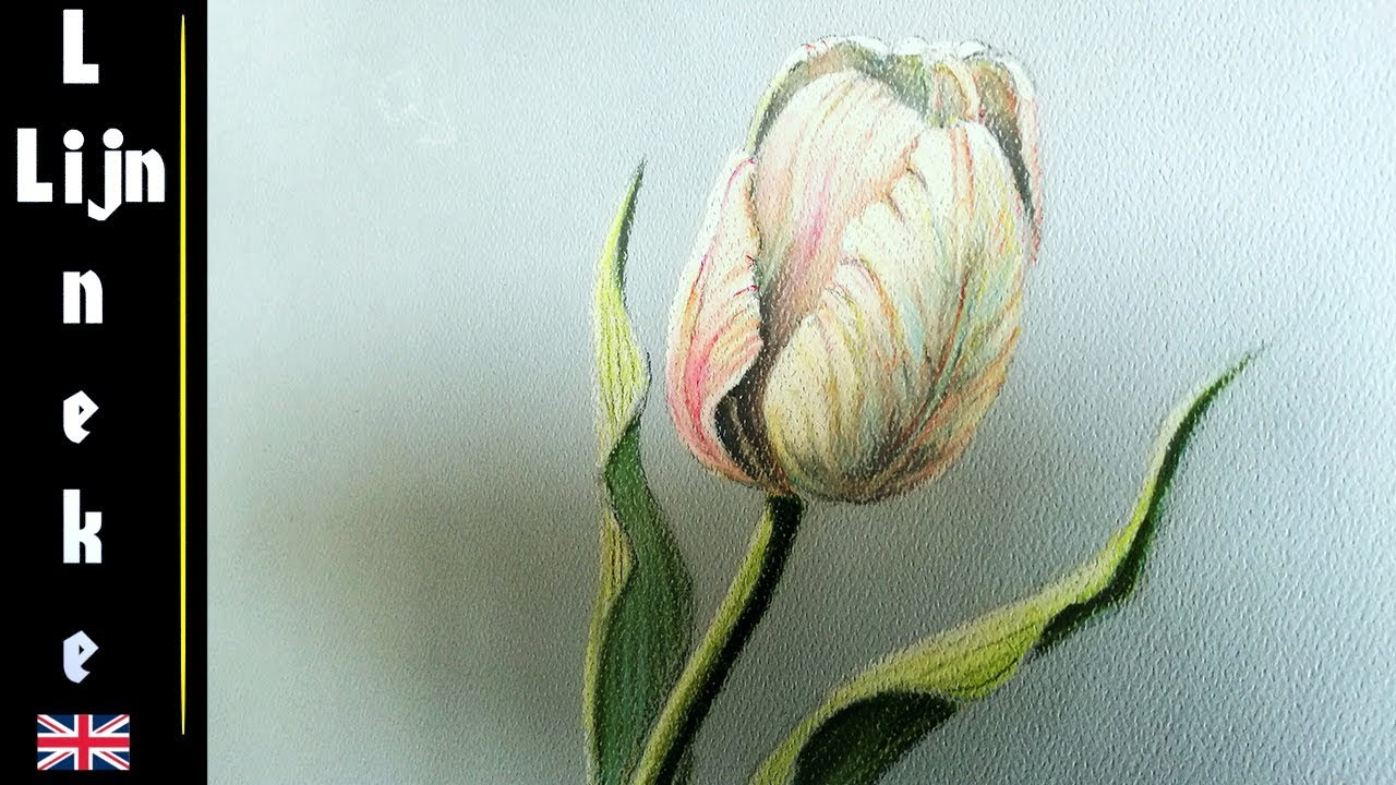 Easy tulip for beginners pencil drawing