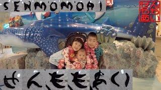 せんもも沖縄美ら海水族館に行く Okinawa Churaumi Aquarium