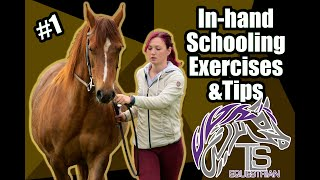 IN HAND EXERCISES FOR HORSES || HOW TO GET YOUR HORSE TO STRETCH DOWN || IN HAND DRESSAGE