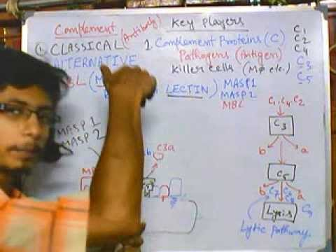 Complement system part 5 (MBL pathway)