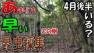 【クワガタ採集&カブトムシ採集】昆虫採集2018 4月!早過ぎる昆虫採集...