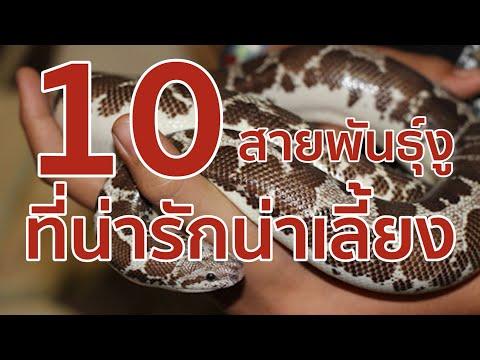 10 สายพันธุ์งูที่น่ารักน่าเลี้ยง