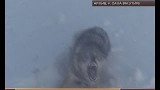 вам охота на волков(Эти и другие новости и передачи смотрите на сайте PORTAMUR.RU., 2014-02-14T01:04:39.000Z)
