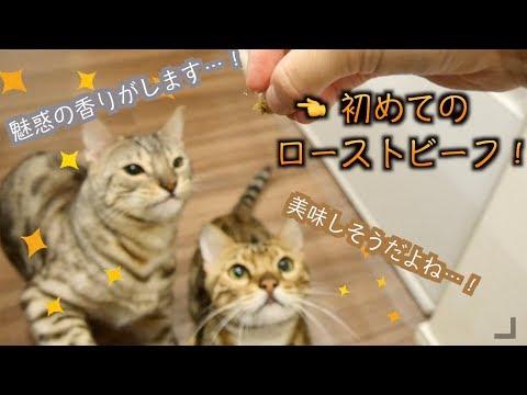猫用ローストビーフあげたら興奮しすぎて日本語喋ったんですけどww