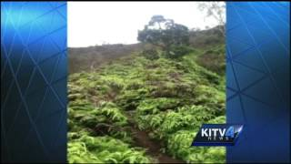 Search continues for missing Haiku stairs hiker