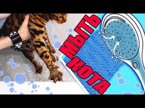 Как мыть кошку шампунем