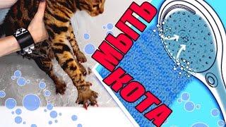 Как мыть кота? Всё получится даже со злыми кошками