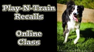 Play-n-train Recalls: Online Dog Training Class