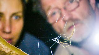 Net-Casting Spider Ensnares Prey | The Dark: Nature's Nighttime World | BBC Earth