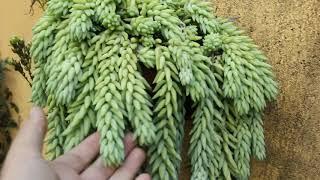Plantas pouco mostradas