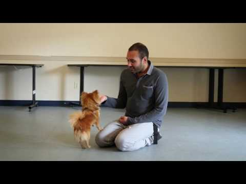 tip-tuesday:-how-to-stop-a-dog-from-licking-people