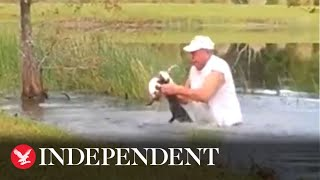 Dramatic video shows cigar-smoking man rescuing puppy from jaws of alligator