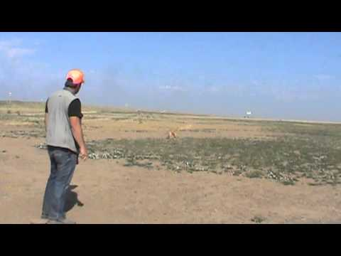 Positive Gun Dog Training - Steady to Wing-Shot-Fall - Phase 1