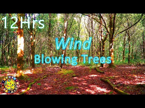 Wind Blowing Through Trees - Relaxing White Noise Sleep Sounds - 12 Hours Long