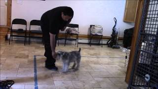 How To Teach Any Dog To Come When Called! - Poughkeepsie, Ny 914-469-2070