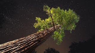 Jusqu'où un arbre peut-il pousser ?