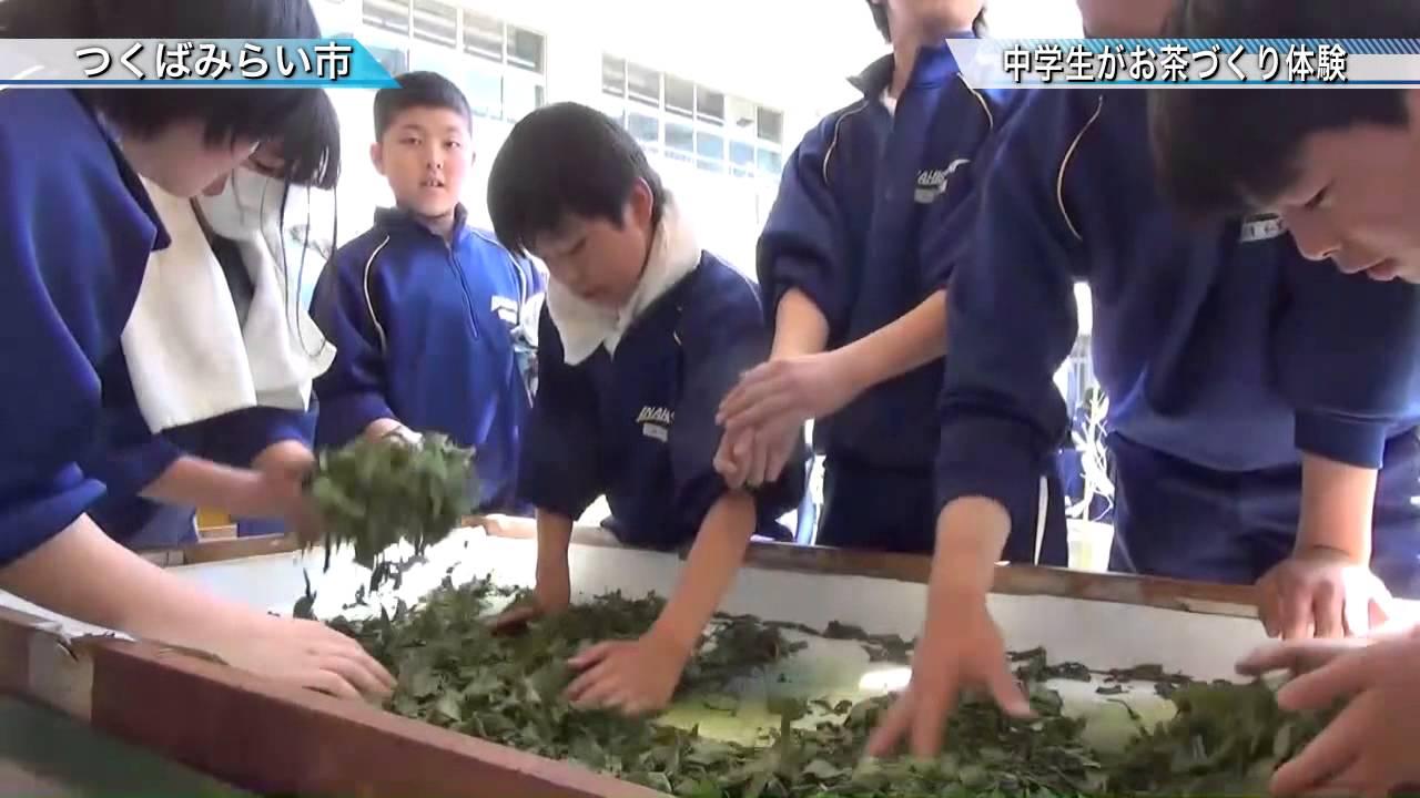 伊奈東中学校でお茶づくり体験〈...