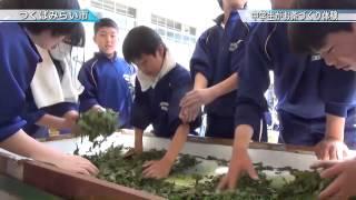 伊奈東中学校でお茶づくり体験〈つくばみらい市〉茨城新聞ニュース(2015.5.20)