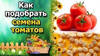 как выбрать семена и сорта томатов(помидор). Основные правила при подборе сортов