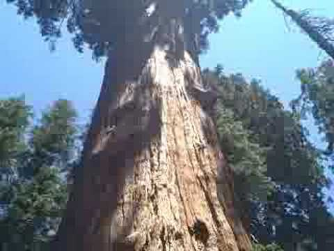 General Sherman Tree & Trail