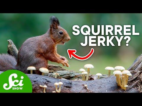 8 Creative Ways Animals Store Food