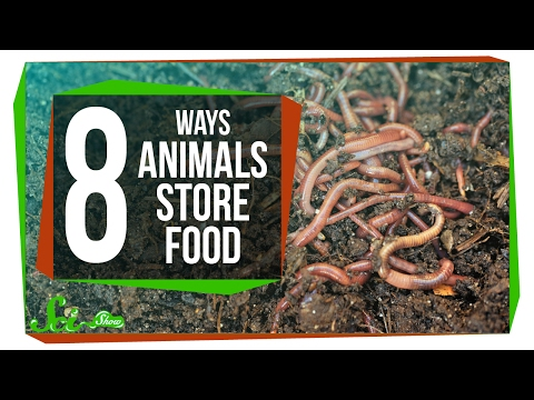 8 Creative Ways Animals Store Food