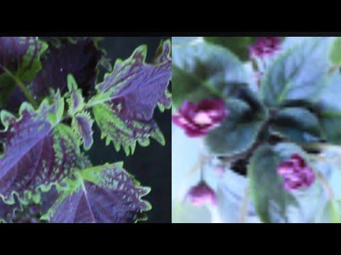 ❤🏡Мои комнатные растения |цветы на подоконнике