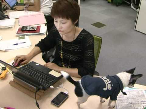 Pets and owners team up at the office