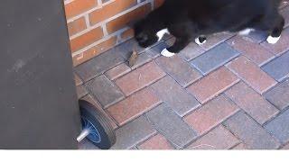 Германия.Кот Вася,отличный охотник(Предлагаю вам посмотреть видео о моём коте