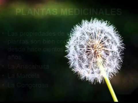 Clasificaci n de las plantas por su utilidad youtube for Utilidad de las plantas ornamentales