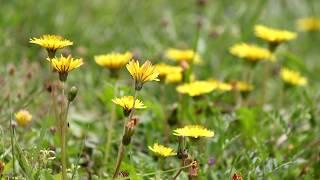爽やかな季節だ!光にも風にも森羅万象すべての存在に癒される。 りゅう...