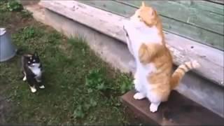 Русские Добрые Коты