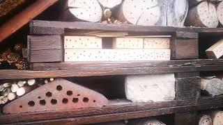 Pszczoły w hotelu dla owadów