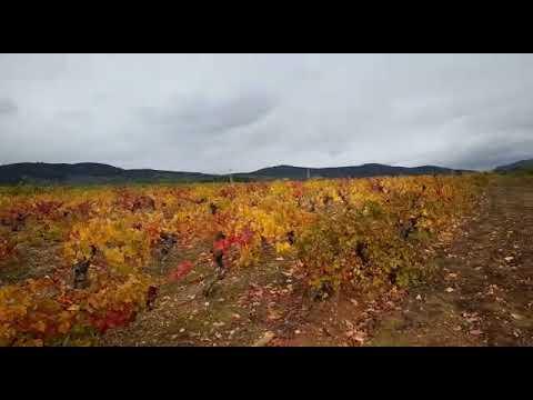 Estallido de colores en el otoño berciano