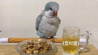 앵무새 영양 간식! 수제 쿠키 만들기