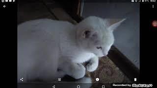 Мая кошка пайт песну