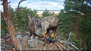 Онлайн камеры. Наблюдение за дикой природой. Эстония.