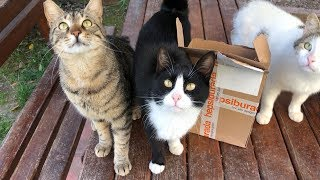 Our cats always follow me when the deliveryman brings a package