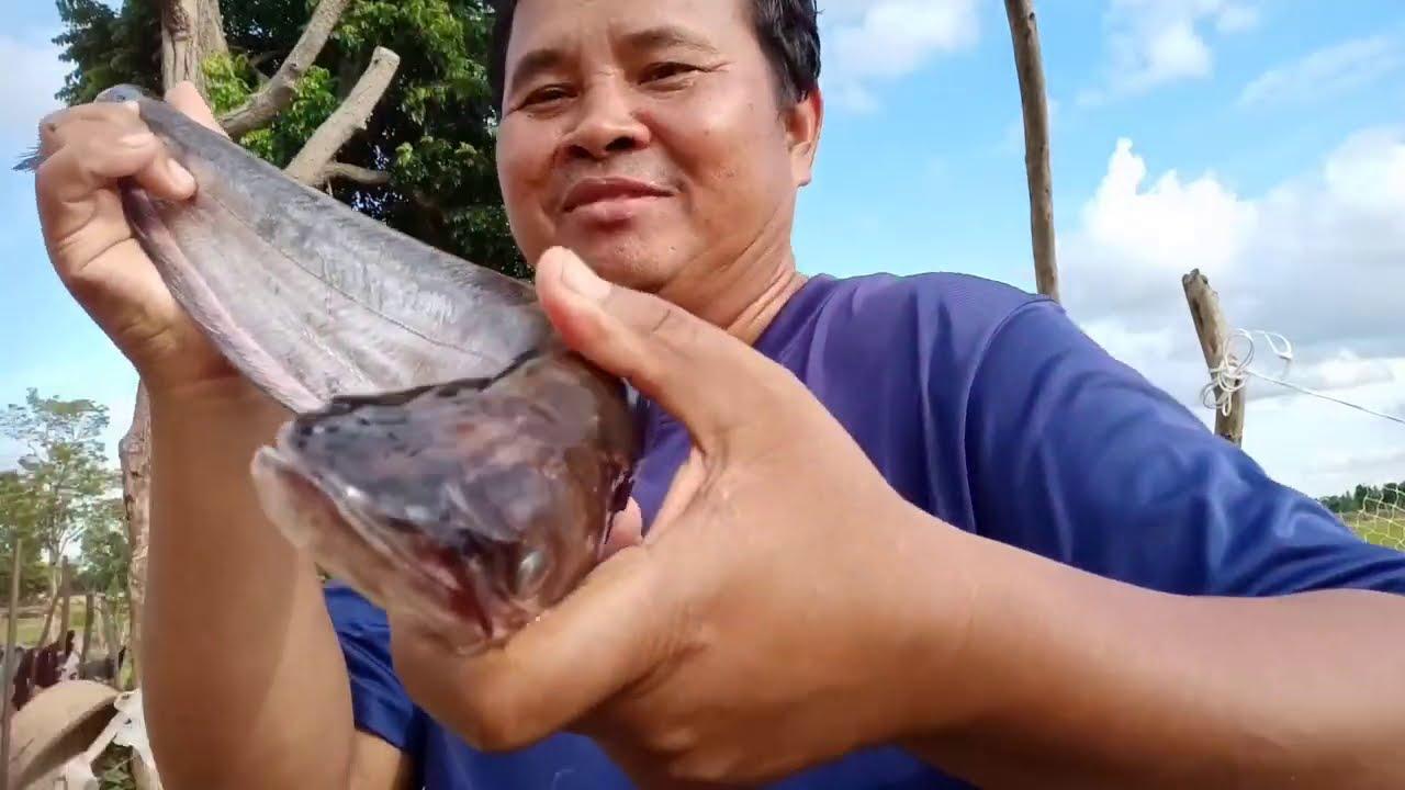 จัดเมนูแซ่บบ้านทุ่ง ลาบปลาค้าว ต้มปลาค้าว กินท่ามกลางธรรมชาติยามเย็น
