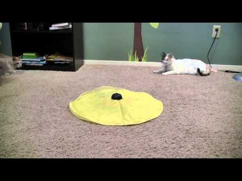 Cat's Meow Toy Review, As Seen On TV