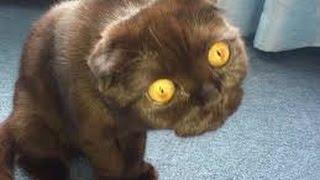 Лучшие приколы с животными 2016 / Fanny cats 2016 * Смех до слез *