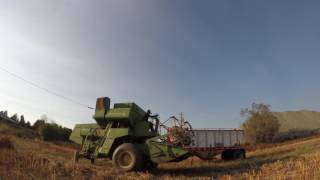 Quinoa harvest 2016